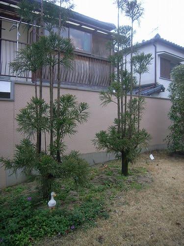 img_daisugis02